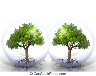 Two trees growing in twin bubbles