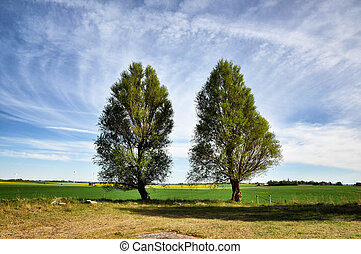 Two trees in spring