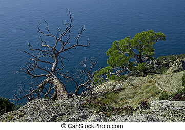 Two trees over the sea.