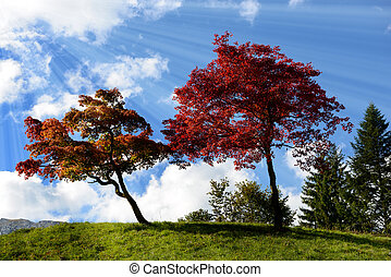 two trees with beautiful fall colors