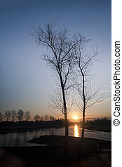 Two trees with sun in background