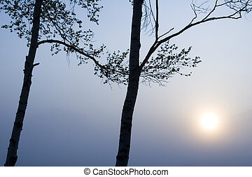 Two Trees with Sun