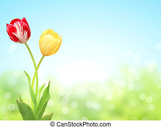 Two tulips on sunny spring background