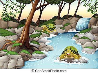 Two turtles living in the river