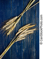 Two types of wheat on a blue wooden board