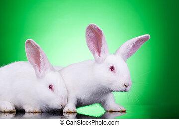 curious bunnies