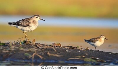 two waders standing on one leg near the water , wildlife in...