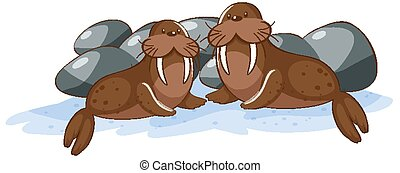 Two walruses on white background