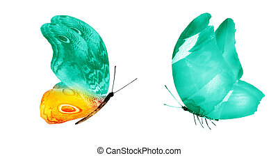Two watercolor butterflies , isolated on white background. Bright collection.