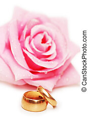Two wedding rings and rose at background