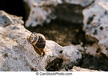Two wedding rings on a shell of a living snail on a stone on a blurred background.