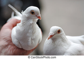 two white doves in hand.