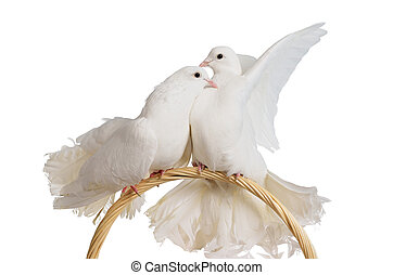 Two white doves kissing and huggung isolated