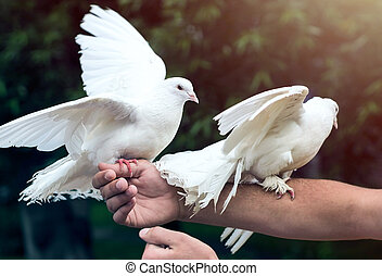 Two white doves on man's hand