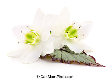 Two white flowers.