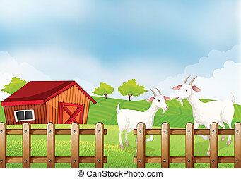 Two white goats at the farm - Illustration of the two white...