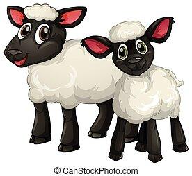 Two white lambs smiling