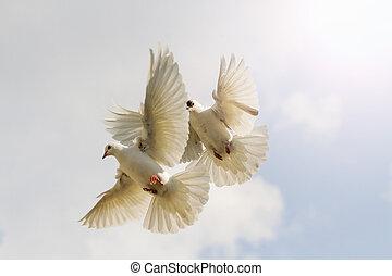 two white pigeons flutter against the sky interesting point, flying birds