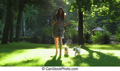 Two white puppies dogs pets have a walk with female girl owner. Static shot
