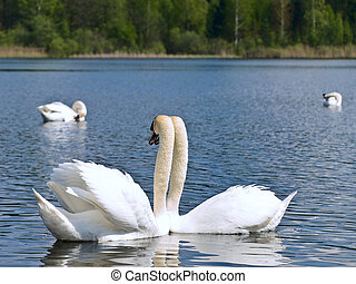 two white swans at the la