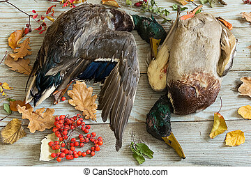 duck hunting, trophies on the table
