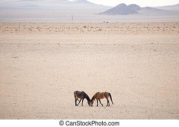 Two wild horses in desert.
