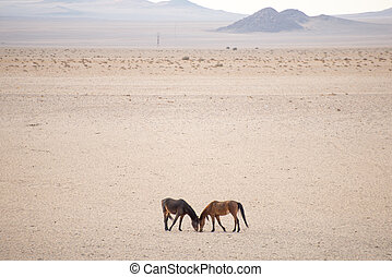 Two wild horses in desert.