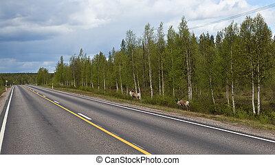 Two wild reindeer.