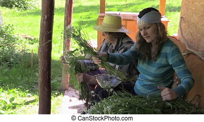 two woman reap camomile - granddaughter and grandma reap...