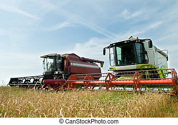 Two working harvesting combines in the summer field of wheat...