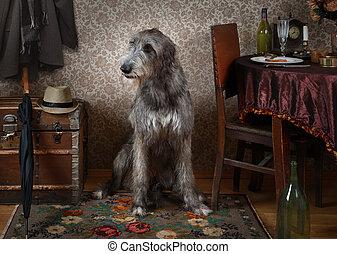 Two years old Irish wolfhound dog indoors