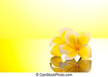 Two yellow Leelawadee flowers under sunshine - Two yellow...