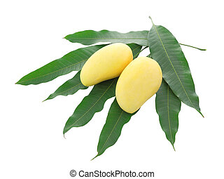 Two yellow mango and pile leaf isolated on white background.