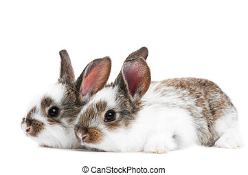 two young baby rabbit isolated
