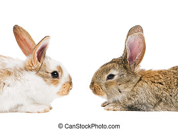 two young baby rabbits isolated on white