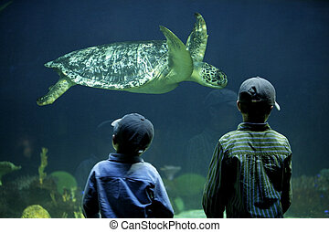 two young boys watching a sea turtle in an aquarium