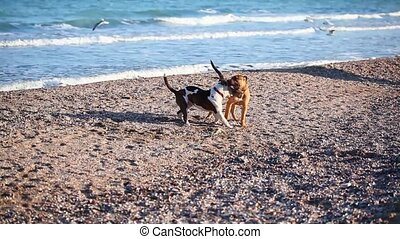 Two young dogs playing on the beach