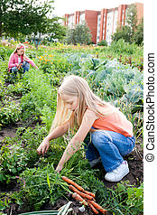 young girls working in vegetable garden - Two young girls...
