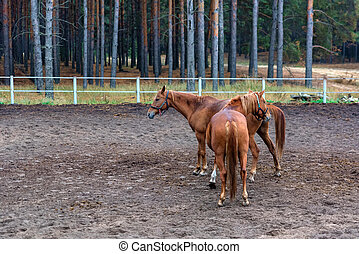 Two young horses in enclosure close up