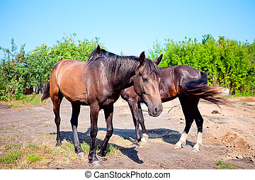 Two young horses on background