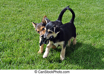two young puppies with a toy gun