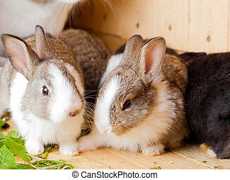 two young rabbits nibble on grass