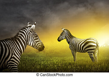 Two zebra on the grassland