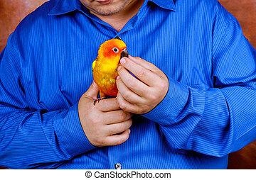 tycka om, färgrik, papegoja, hus, papegojor, holdingen, leka, man