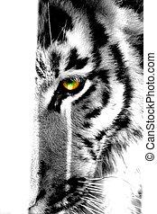 tygrys przypatrują się