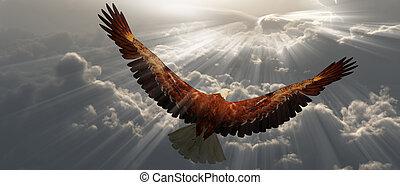 tyhe, águia, vôo, nuvens, acima