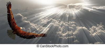 tyhe, αετός , πτήση , θαμπάδα , επάνω
