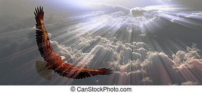 tyhe, ワシ, 飛行, 雲, の上