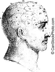 Type cranial given by Spurzheim in profile, vintage engraving.