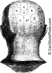 Type cranial given by Spurzheim, rear view. vintage engraving.